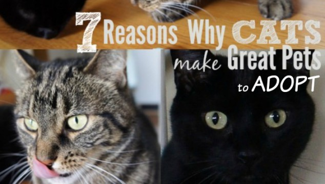 7 Reasons Why Cats Make Great Pets to ADOPT