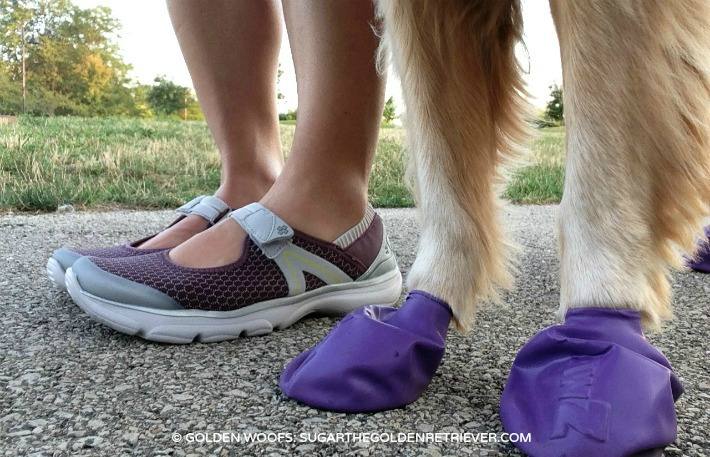 Protect Your Dog's Paws with PawZ