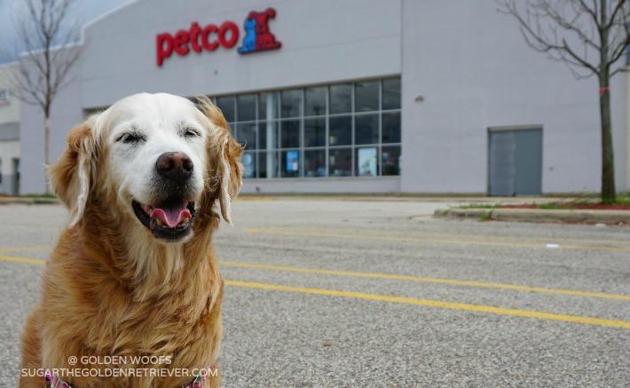 Happy Dog at Petco