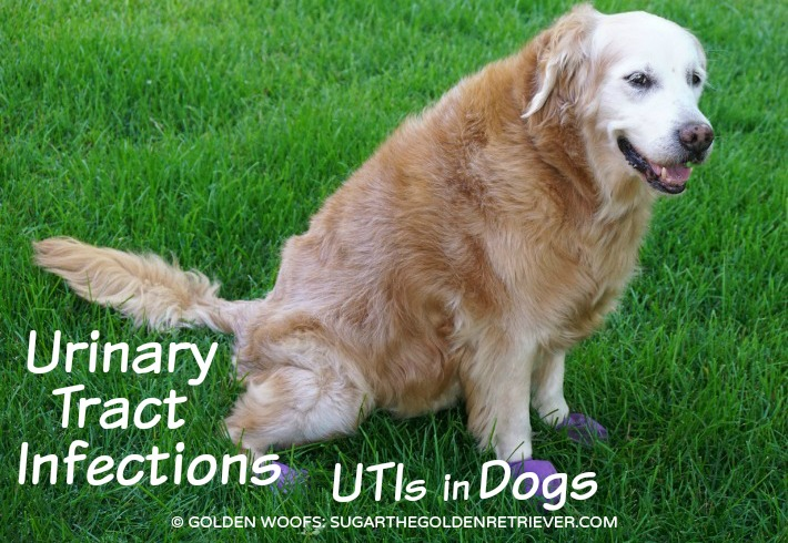 wet cat food for urinary tract infection