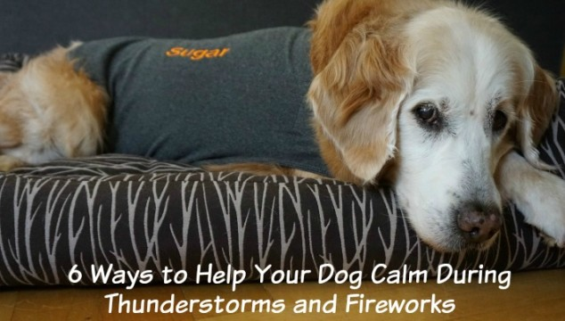 Dog Calm Thundershirt