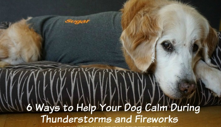How To Keep Your Dog Calm During Thunderstorms and Fireworks