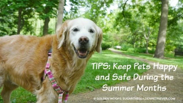 Keep Pets Happy Petco Summer Tips