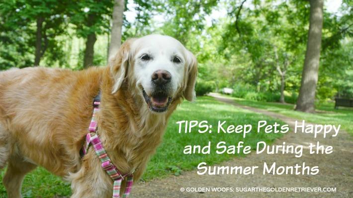 Keep Pets Happy Petco Summer Tips