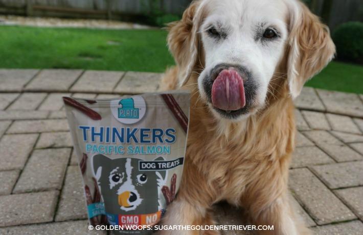 Thinkers Plato Treats