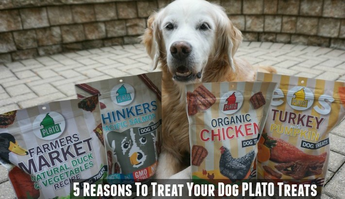 5 Reasons To Treat Your Dog Plato Treats