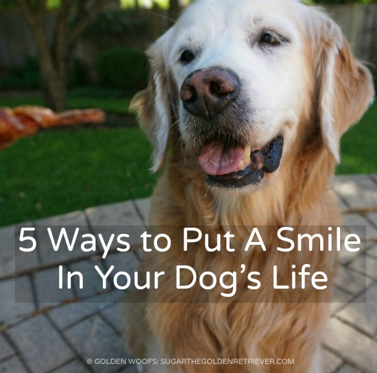 5 ways to Put A Smile in Your Dog's Smile