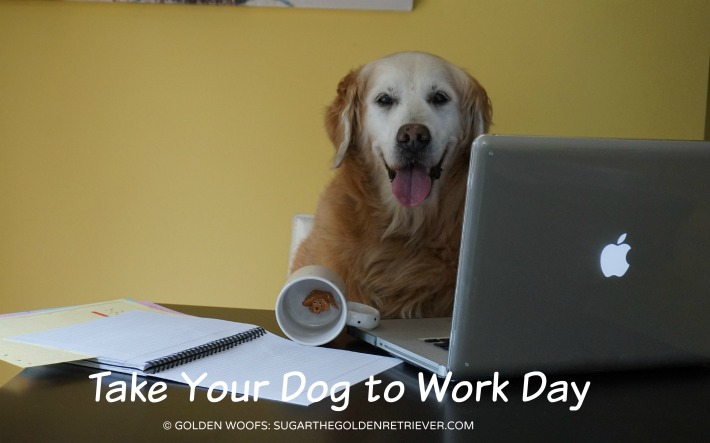 take your dog to work day golden woofs