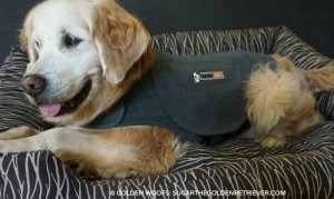 Thundershirt Dog Calm