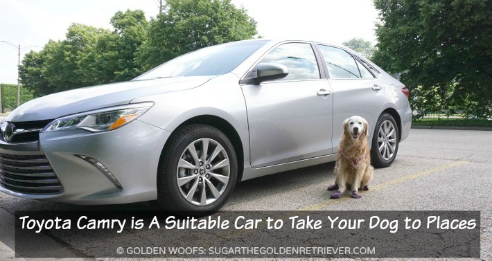 Is Toyota Camry A Suitable Car to Take Your Dog to Places? #DriveToyota