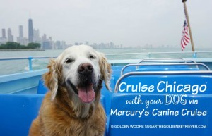Cruise Chicago With Your Dog via Mercury's Canine Cruise