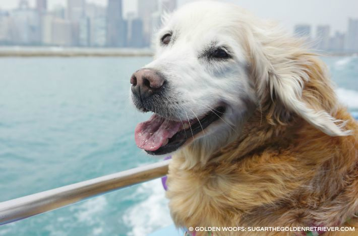 Cruise Chicago with your DOG