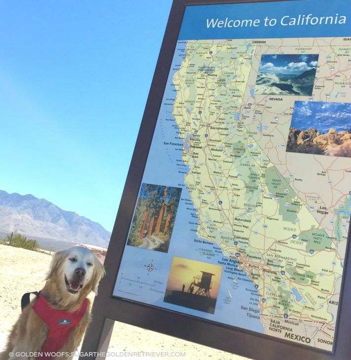 Golden Woofs SUGAR from California