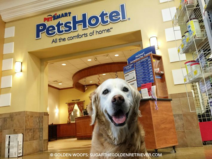 Petsmart Hotel Rooms Day Camp