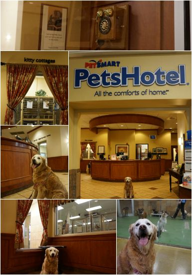 Petsmart Pet Hotel