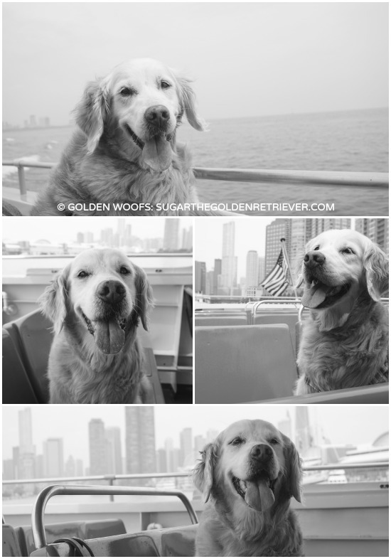 Chicago Canine Cruise: Mercury Cruises