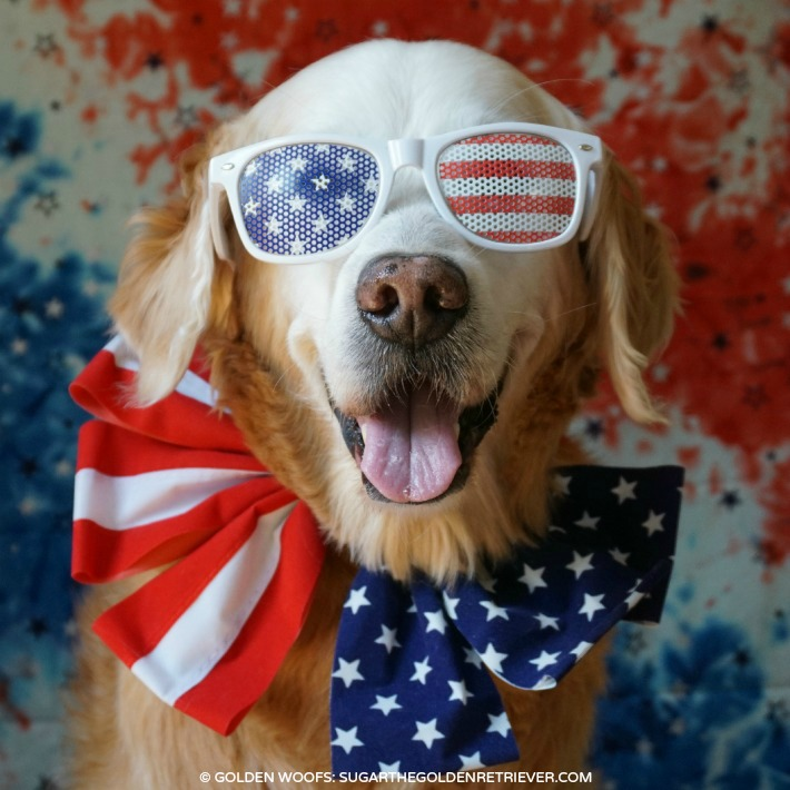 Patriotic Dog: Golden Retriever