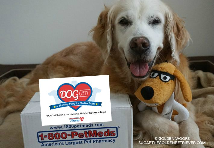 Join the 1-800-PetMeds DOGust Birthday Sweepstakes - Golden