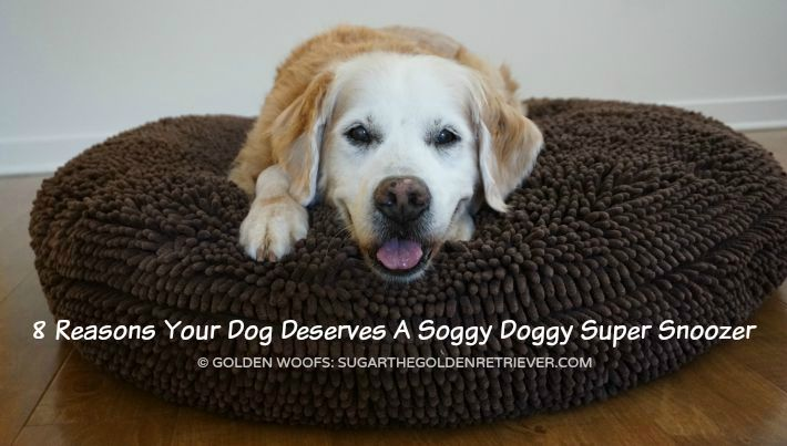 8 Reasons Your Dog Deserves A Soggy Doggy Super Snoozer