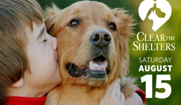You Can Help #ClearTheShelters