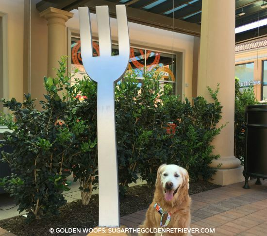 Dog Friendly Dining Irvine Spectrum