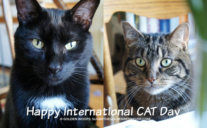 international cat day - photo #12