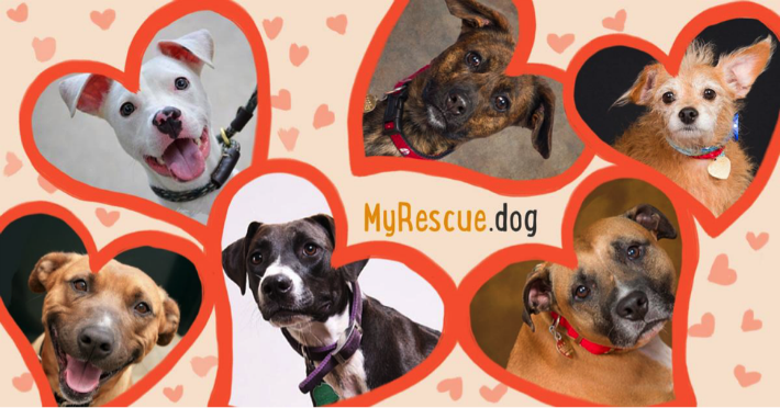 JOIN MyRescue.dog