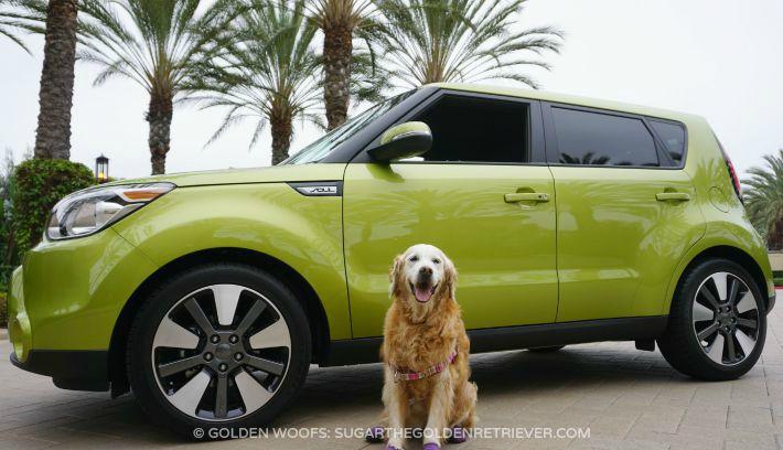 Kia Soul Alien Dog Friendly Rides