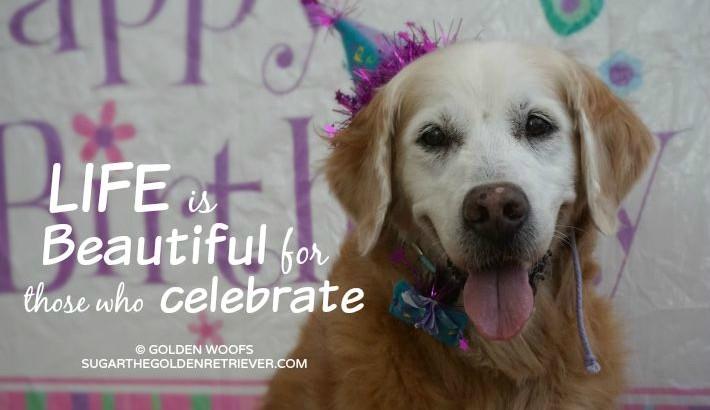 {This Moment} See Beautiful: Celebrating Sugar's 14thBarkday