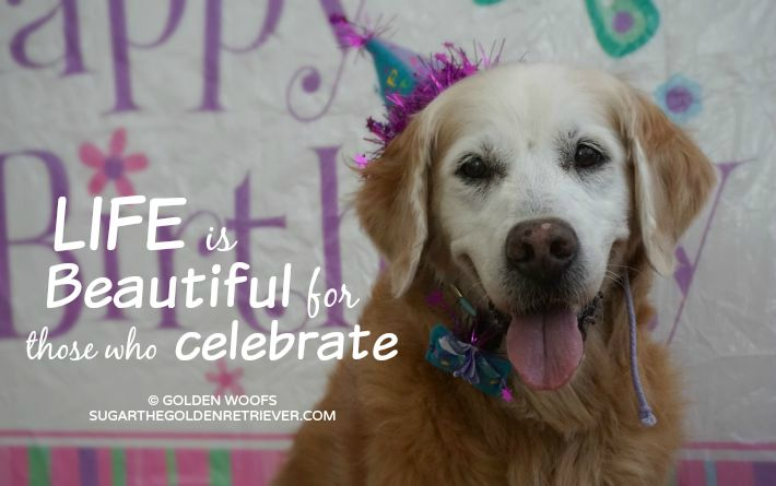 Life is Beautiful, Celebrate Dog Birthday