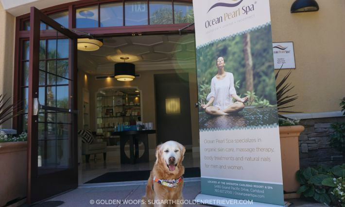 Family fun dog friendly sheraton carlsbad golden woofs for A family pet salon