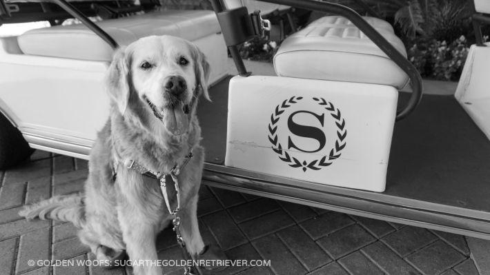 SUGAR at dog friendly Sheraton Carlsbad