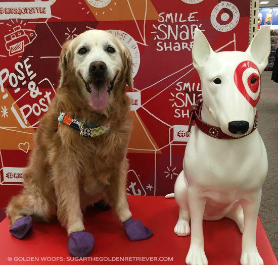 SUGAR w Target Dog