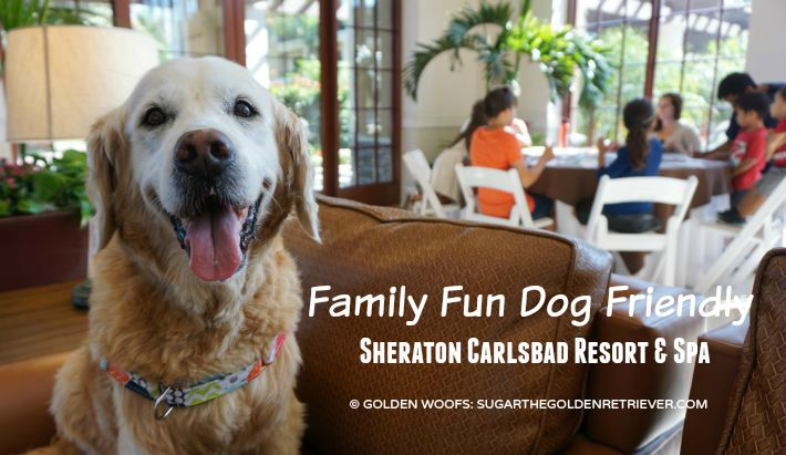 Sheraton Carlsbad family fun dog friendly