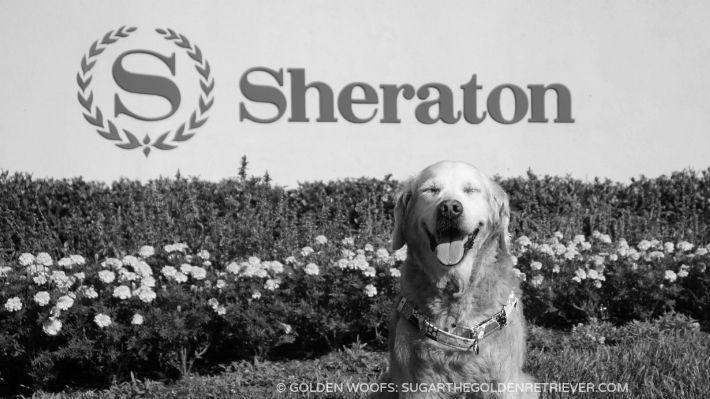 S for SUGAR at Dog Friendly Sheraton Carlsbad