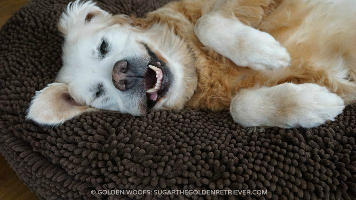 Soggy Doggy Super Snoozer Happy Dog