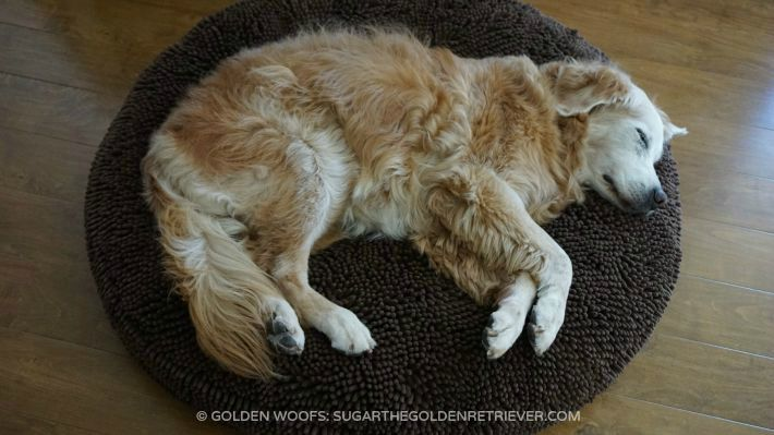 Super Snoozer dog bed conforms dog's body