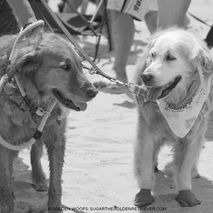2015 Surf Dog Unleashed Kalani & Sugar