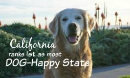TOP 25 MOST DOG HAPPY U.S. STATES CALIFORNIA