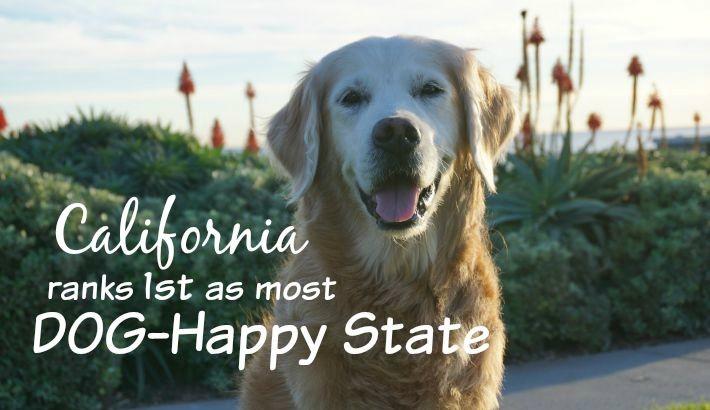 Top 25 Most DOG HAPPY U.S. States