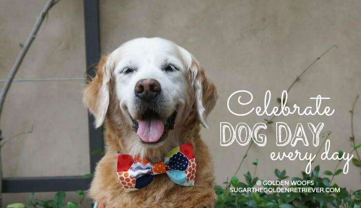 Celebrate Dog Day Every Day