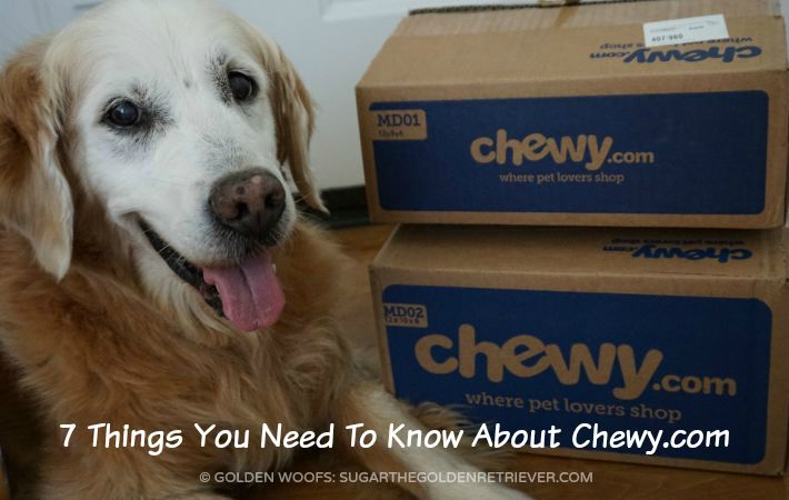 chewy.com 7 Things You Need To Know About