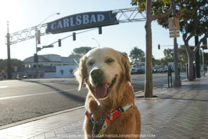 dog friendly Carlsbad CA San Diego