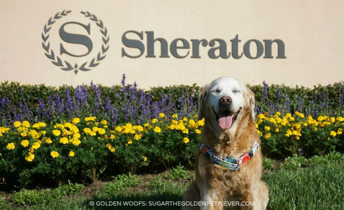 dog friendly Sheraton Carlsbad