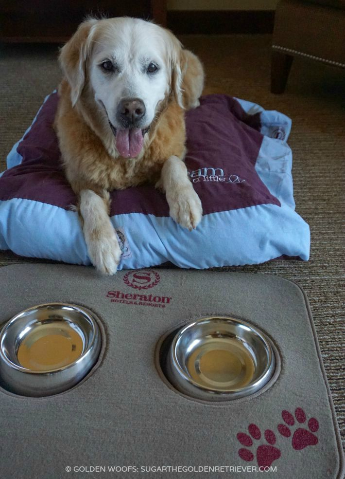 dog friendly services Sheraton Carlsbad