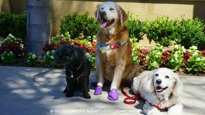 dog friends at Sheraton Carlsbad
