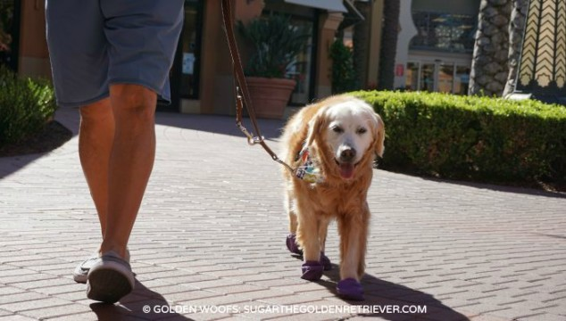 dog mall walking irvine spectrum