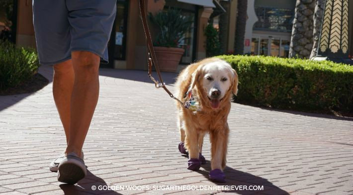 Dog Walking at Dog Friendly Orange County Mall