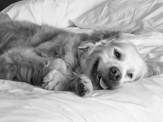 Sleep-in with Your Dog