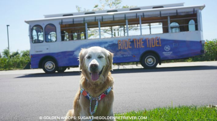 ride the tide trolley Sheraton Carlsbad